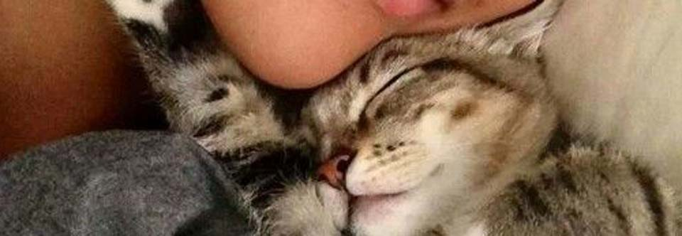 Spanie z psem lub kotem – wady i zalety.