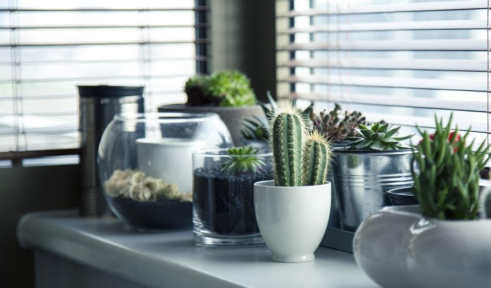 jak oczyścić powietrze w mieszkaniu